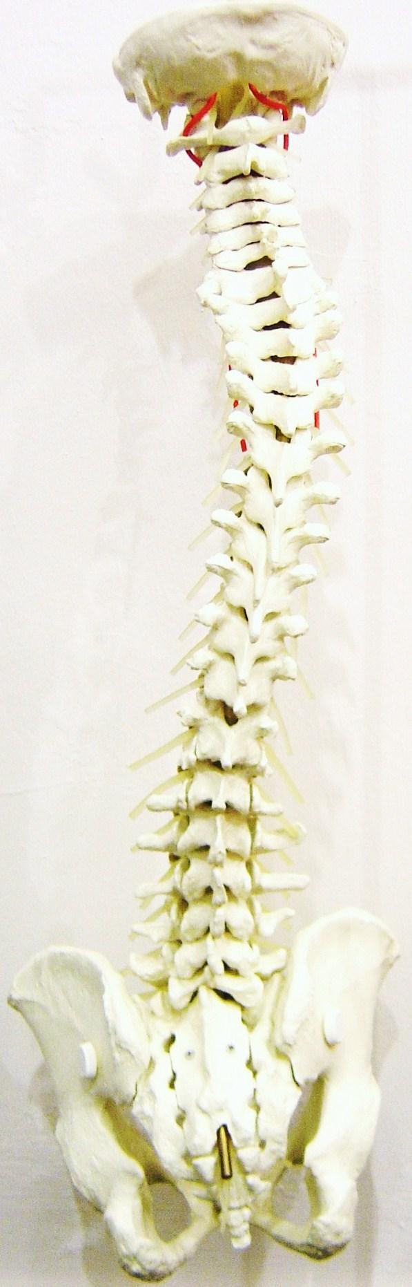 full spine 11255408 std